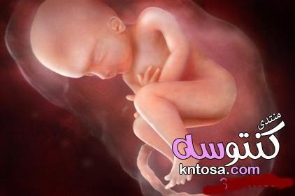 معرفة جنس الجنين بدون سونار والطريقة سهلة في المنزل kntosa.com_02_19_154