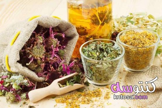 أعشاب طبيعية للتخلص من الإكزيما نهائيًا kntosa.com_02_21_161