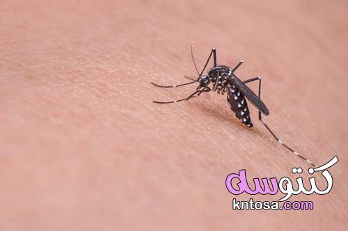 العلاج المنزلي لدغات البعوض kntosa.com_02_21_162
