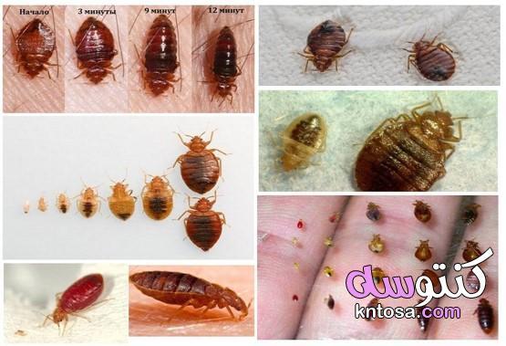 انواع حشرات الفراش بالصور kntosa.com_03_20_159