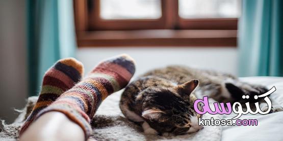 ازاي تحمي نفسك وأسرتك لو عندك حيوان أليف في البيت؟