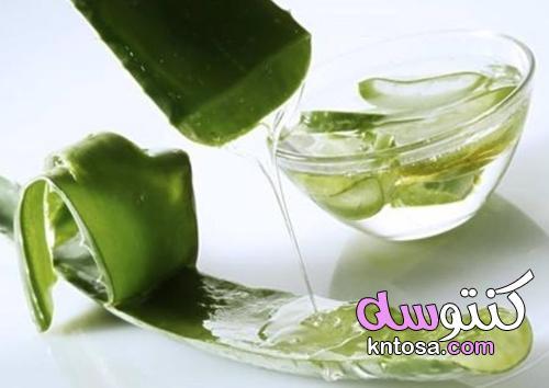 طريقة زراعة الصبار في المنزل واستخراج الجل منه kntosa.com_03_21_162