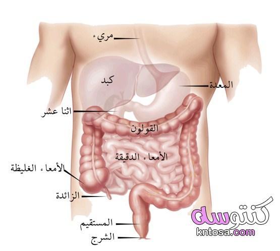 أمراض الاثنى عشر ،قرحة الاثني عشر سرطان الإثني عشر. kntosa.com_05_19_156