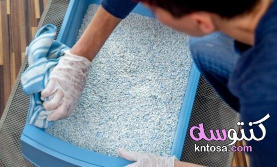 كيفية الحفاظ على صندوق فضلات القطط: 5 أشياء جيدة يجب معرفتها ونصائح يجب معرفتها kntosa.com_05_21_161