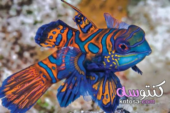 """ماهي اجمل سمكة في العالم ؟ """" kntosa.com_05_21_161"""