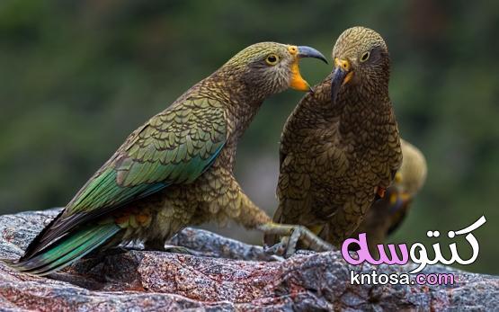 """هل تعلم """" أكثر الطيور حذرا ؟ """" kntosa.com_07_21_162"""