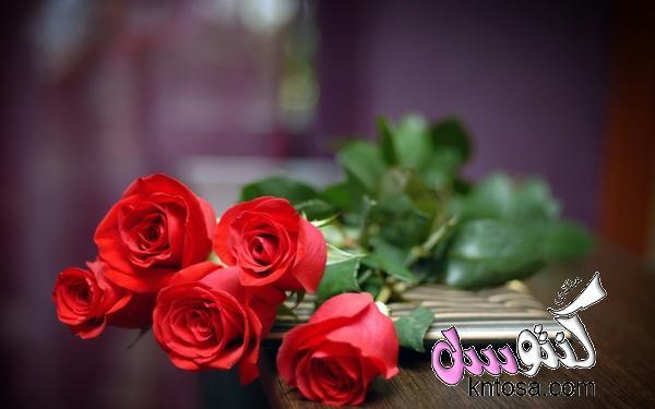 ورد احمر طبيعي,ورد احمر رومانسي,ورد احمر وابيض,اجمل ورد احمر رومانسي,ورد احمر جميل kntosa.com_08_18_153