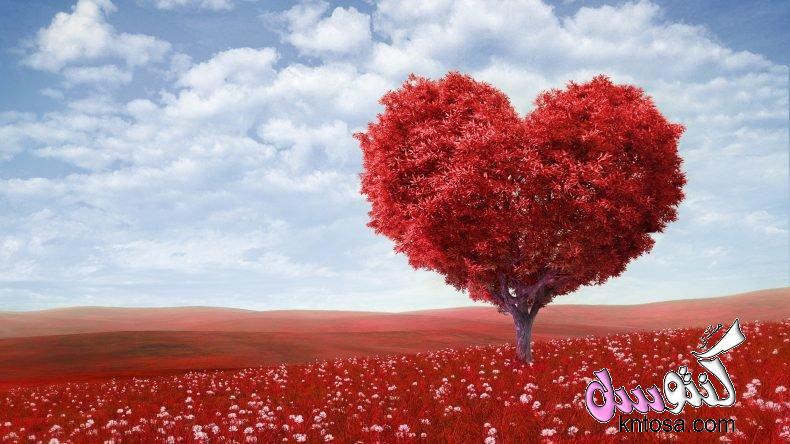 حكم في الحب والحياة,حكم حب حزينة,حكم حب رومانسية,الحياة والحب,حكم عن الحب والحياة,حكم حب قصيرة kntosa.com_08_18_153