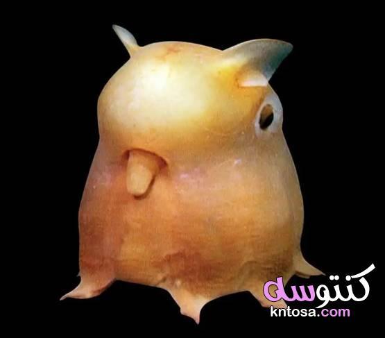 الأسماك الناطقة.. وأغرب المخلوقات على مر التاريخ 2020 kntosa.com_09_19_157