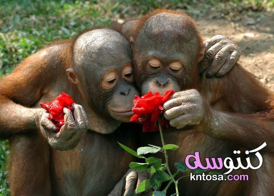 صور حيوانات جميلة وطريفة في الغابة - أجمل صور الحيوانات 2021 kntosa.com_09_21_161
