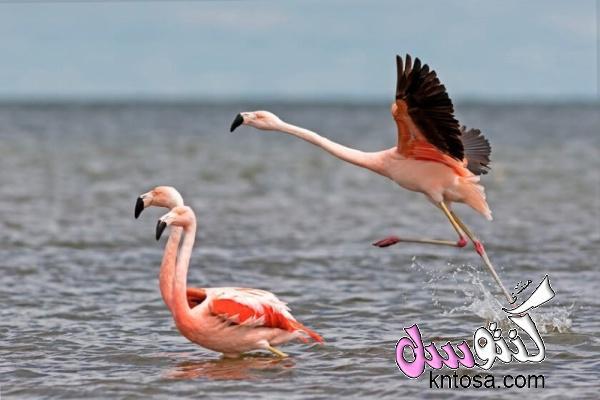 تركيب الريش في الطيور.فوائد الريش للطيور.بحث عن انواع ريش الطيور.استخدامات ريش الطيور kntosa.com_10_18_153