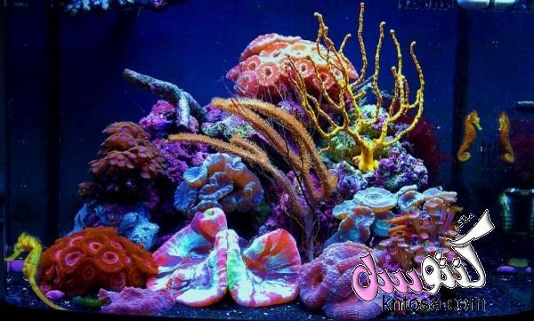 مدة اضاءة حوض السمك,كيف اجعل ماء حوض السمك صافي,هل تنام اسماك الزينة,مدة تشغيل فلتر حوض السمك kntosa.com_10_18_153