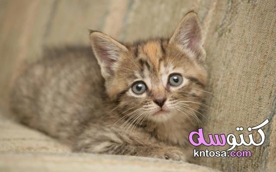 اجمل قطة في الكون, قطط روعة,قطط جميلة,اجمل واروع صور قطط صغيرة cute cats ستراها في حياتك ! kntosa.com_10_19_156