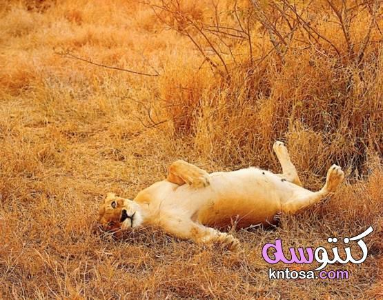 صور مذهلة لحمل الحيوانات الحمل لدى الحيوانات 2020 kntosa.com_10_19_157