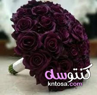 مجموعة اللون الاحمر التوتي أين محبي هذا اللون kntosa.com_10_19_157