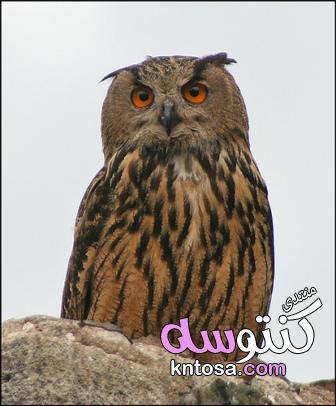 معلومات عجيبة عن الطيور,طيور غريبة حول العالم,حقائق مبهرة عن الطيور,حقائق عن الطيور,الطيور,انواعها kntosa.com_11_19_154