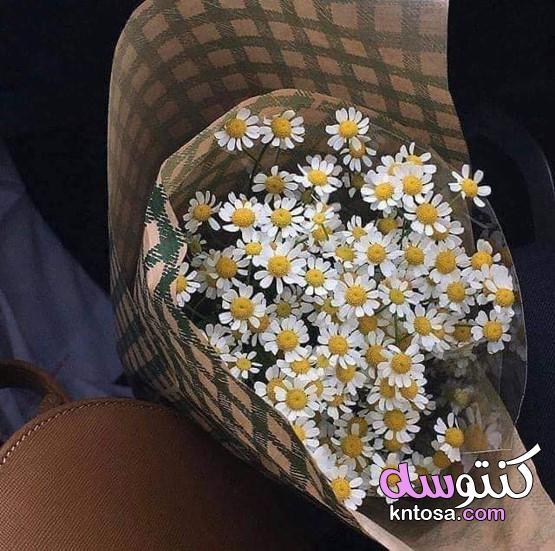 هدايا ورد طبيعي،اشكال باقات ورد طبيعي،اشكال باقات ورد غريبه،باقات ورد هدايا انستقرام kntosa.com_11_19_157