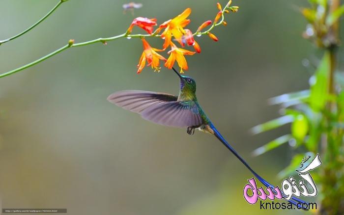 مراحل الطيران عند الطيور.تحليق الطيور.كيف تطير الطيور.كيف يساعد جناح الطائر على الطيران.الية الطيران kntosa.com_12_18_153