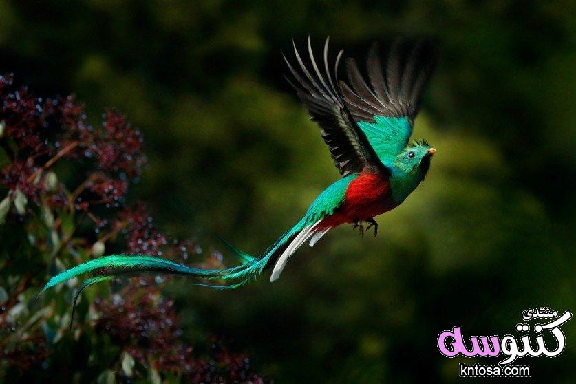 اجمل طيور العالم بالصور.صوراجمل الطيور.اجمل الصور عصافير.اجمل العصافير في العالم kntosa.com_12_18_153