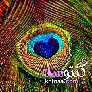 خلفيات فارغة للكتابة عليها,خلفيات فوتوشوب للاستوديوهات,اجمل الصور للتصميم عليها2019 kntosa.com_12_19_154