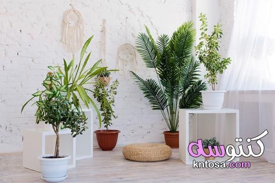 أكثر من صورة لتجددي من ديكور المنزل بالنباتات،ديكورات زرع داخل المنزل،ديكور زرع داخلي kntosa.com_12_20_158