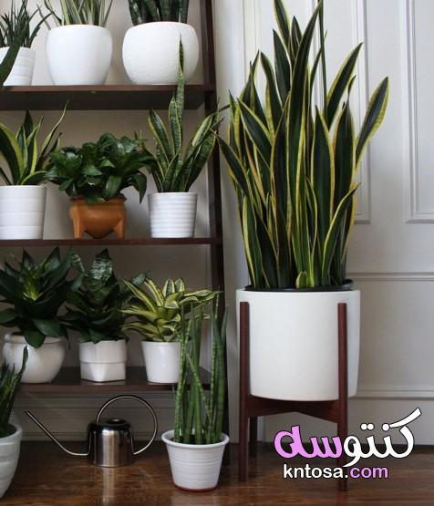أكثر من صورة لتجددي من ديكور المنزل بالنباتات،ديكورات زرع داخل المنزل،ديكور زرع داخلي