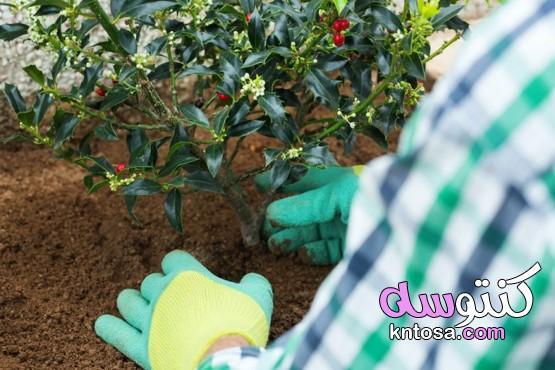 طريقة زراعة الورد الجوري بالصور kntosa.com_12_21_161