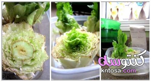 16 فاكهة وخضروات لتنمو من بقايا الطعام ،مشروع للزراعة من بقايا الطعام kntosa.com_12_21_162