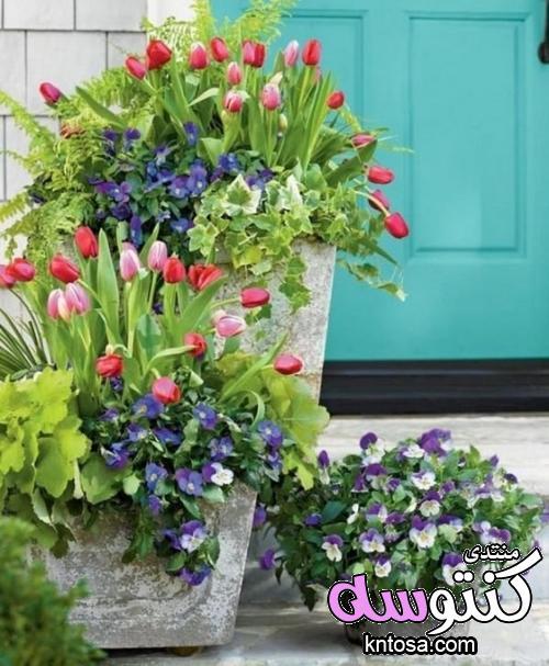 الصور ورود.مناظر طبيعية ورود وزهور.اجمل ورد طبيعي في العالم.ورود طبيعية خلابة.ورود الحب kntosa.com_13_18_153