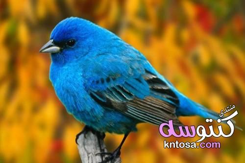 لو بتحب تربية العصافير.. 15 نصيحة هتساعدك فى الحفاظ عليها kntosa.com_13_19_155
