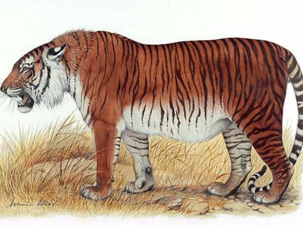 10 حيوانات منقرضة قد تعود إلى الحياة ,حيوانات منقرضة سنتمكن من رؤيتها قريبا kntosa.com_13_19_155