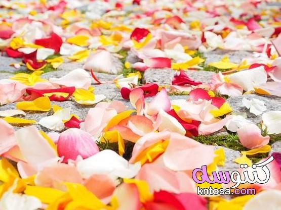 كيف تنظم حفل زفاف الأحلام بتكلفة أقل؟ kntosa.com_13_21_161