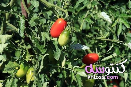 فوائد صودا الخبز لحديقة الأحلام kntosa.com_13_21_163