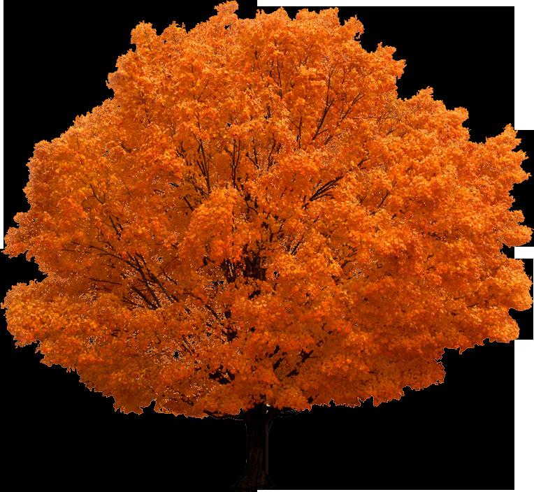 شجرة صور PNG مع خلفيه شفافة,أكبر مجموعة سكرابز اشجار الخريف2019 Autumn Trees Clipart kntosa.com_14_18_154