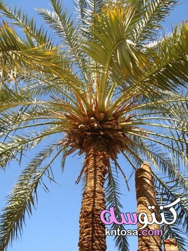 النباتات التي تعطي طاقة سلبية kntosa.com_14_21_162