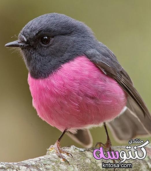 طيور بألوان جميلة،صور طيور من الطبيعه 2019,صورطيورغريبة,صور عصافير ملونه انستقرام kntosa.com_15_18_154