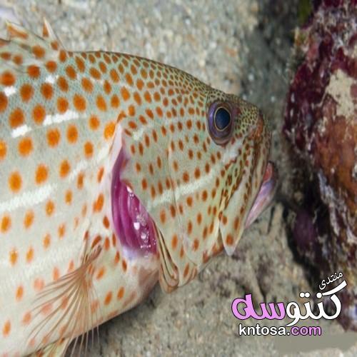 أسرار رائعة عن الأسماك لم تكن تعرفها kntosa.com_15_19_155