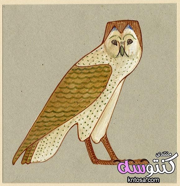 رموز مصرية قديمة رسمت باسم اللورد هوارد كارتر kntosa.com_16_18_153