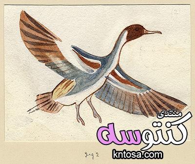 رموز مصرية قديمة رسمت باسم اللورد هوارد كارتر الجزء الثانى kntosa.com_16_18_153