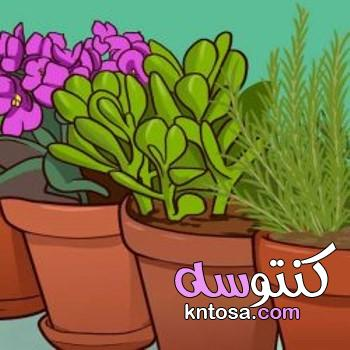 النباتات فنغ شوي للحصول على الإيجابية والصحة والثروة!