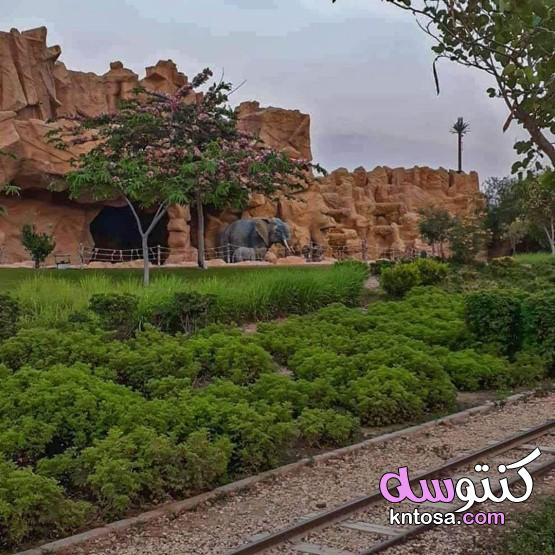 بالصور رحلتى داخل حديقة الأسرة_ Family park،حديقة الأسرةمكان جديد ومختلف في قلب القاهرة