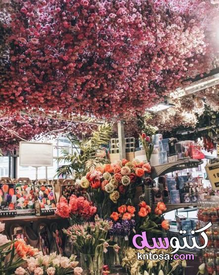 تنسيق الزهور للاعراس،فن تنسيق الزهور،فن تنسيق الزهور الياباني kntosa.com_16_20_160