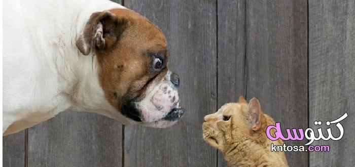 قصة العداوة بين الكلاب والقطط kntosa.com_16_21_162