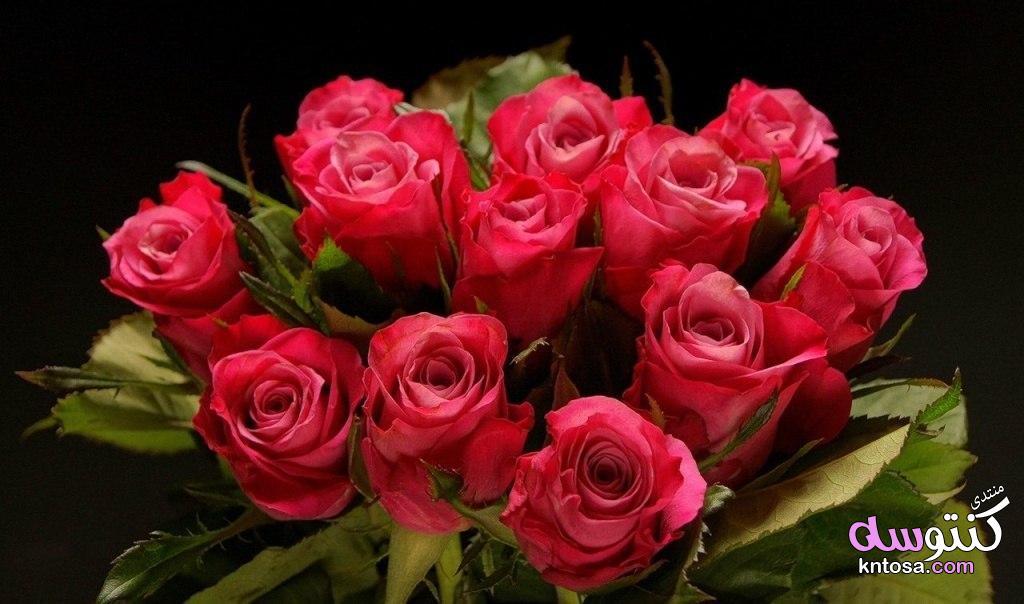 اجمل الورود الرومانسية ورد طبيعى روعه خلفيات ورود جميلة جدا ورود