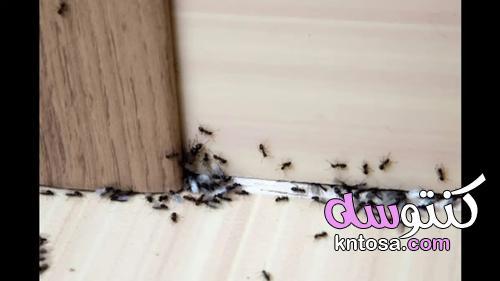طريقة للتخلص من النمل والناموس والصراصير وجميع حشرات الصيف من المنزل فورا