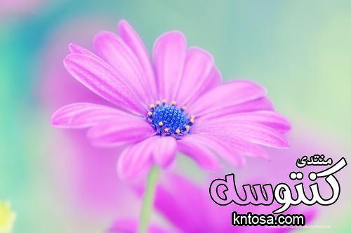 ورود حب وغرام,ورود رومانسية جدا,ورود الحب والعشق,ورود رومانسية للاهداء,صور ورد حب kntosa.com_18_18_153
