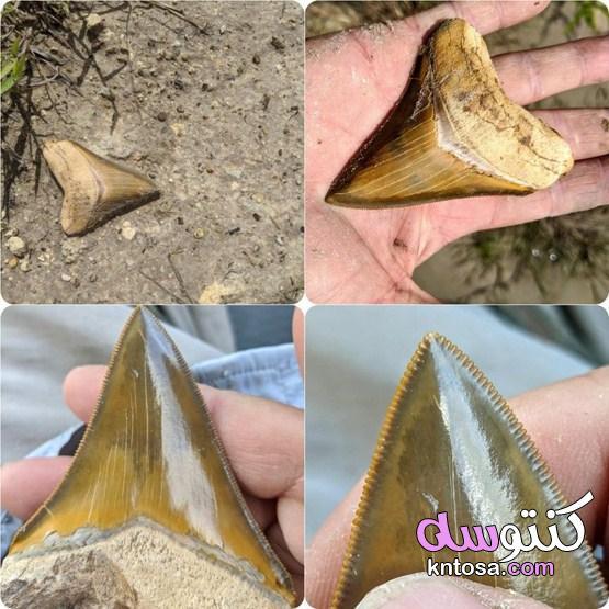 صور مفاجئة تكشف عن سحر عناصر الطبيعة 2022 kntosa.com_18_21_161