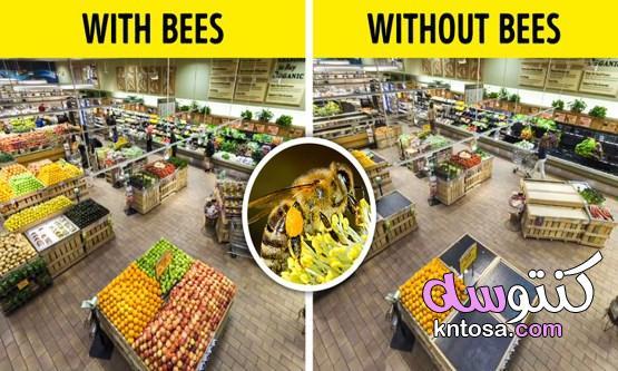 ماذا يحدث في حالة اختفاء الحشرات من الأرض؟ الذباب 2020 kntosa.com_19_19_157