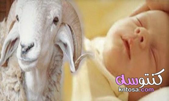 ما هو حكم العقيقة وشروطها في الإسلام kntosa.com_19_21_163