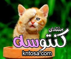 تربية الحيوانات في المنزل أمر إيجابي وضروري kntosa.com_20_18_154